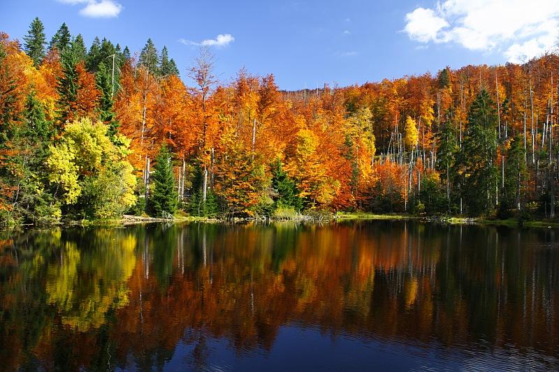Богемский (Баварский) лес